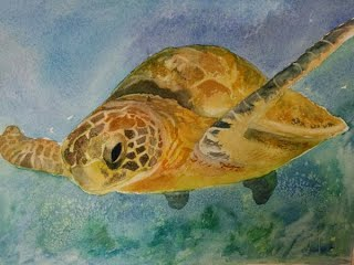 Green backed Turtle