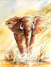 African Giant (Watercolour)