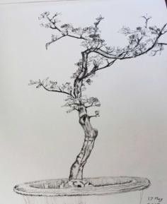 Bonsai C May 2019.jpg
