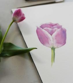 Tulips L Apr 2019.jpg