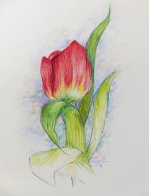 Tulips N Apr 2019.jpg